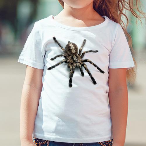 Pavouk Tarantule - Tulzo