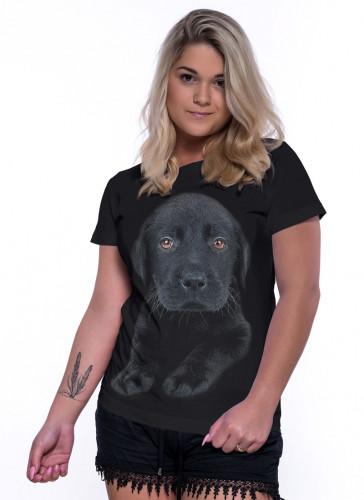 Pes labrador černé štěně - Tulzo
