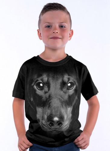Černý jezevčík - Tulzo